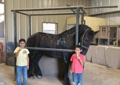 friesian-horses-children