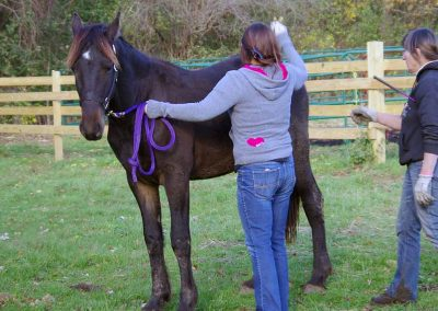 horsemanship-experience-3