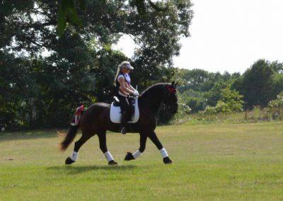 horsemanship-experience-friesians